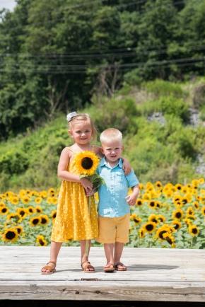 sunflowers-2019-5